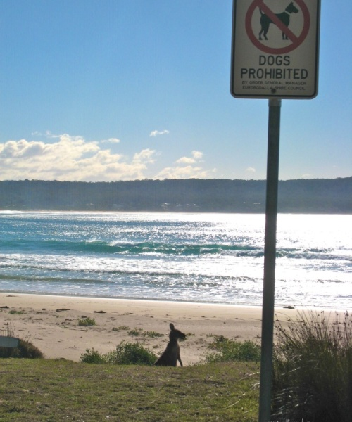 No Dogs, but Wallabies allowed