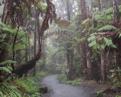 Big Island Rainforest