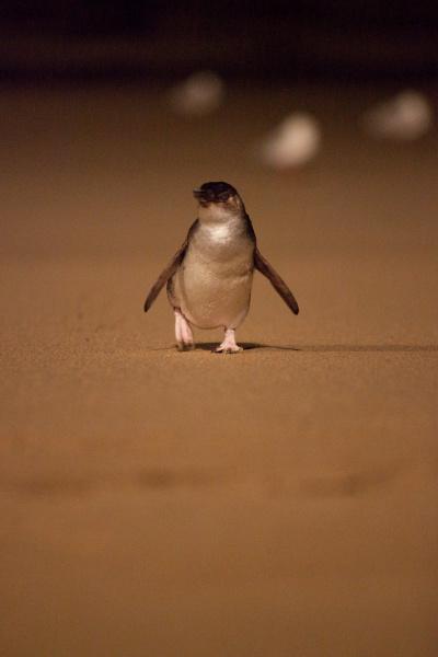 Penguin Parade_02 (medium res)