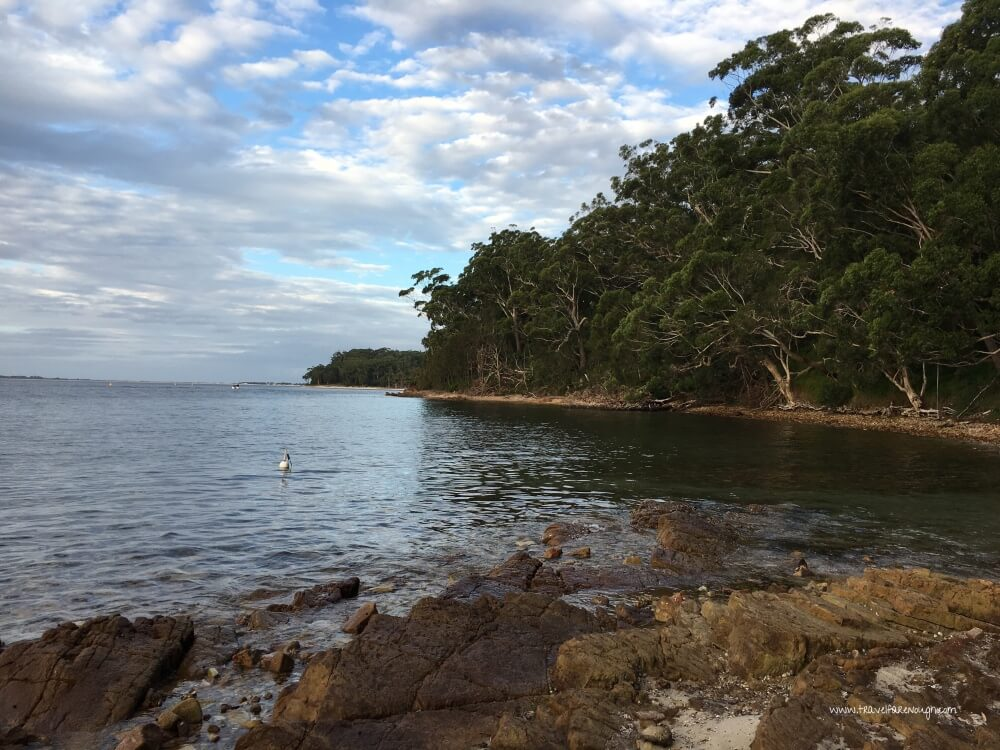 Swimming With the Fish at Port Stephens