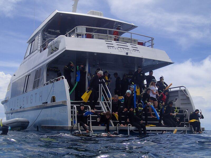 Wavelength snorkelling tour