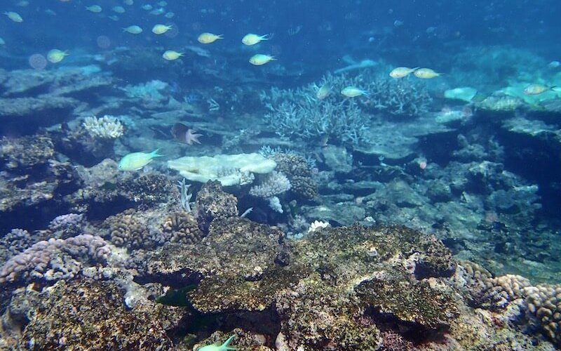 Coral is impacted on the GBR