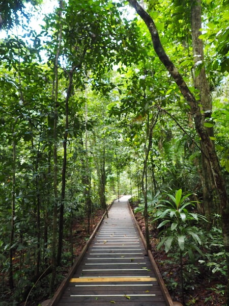 One of the many walks in the Daintree Rainforest.
