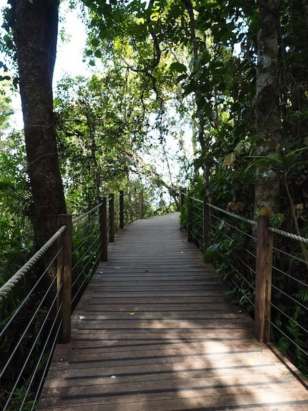 Boardwalk on the skyrail