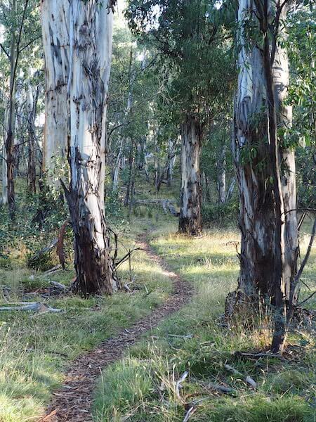 Kosi Bushwalks