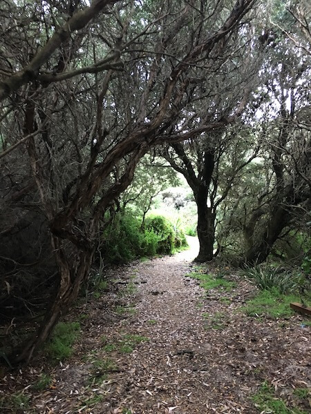 Lots of trails to explore at Point Hicks