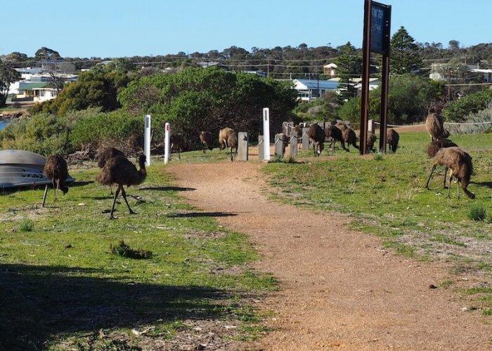 Wildlife in Coffin Bay