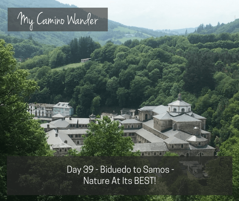 Day 39 of the Camino Wander – Nature At Its BEST!