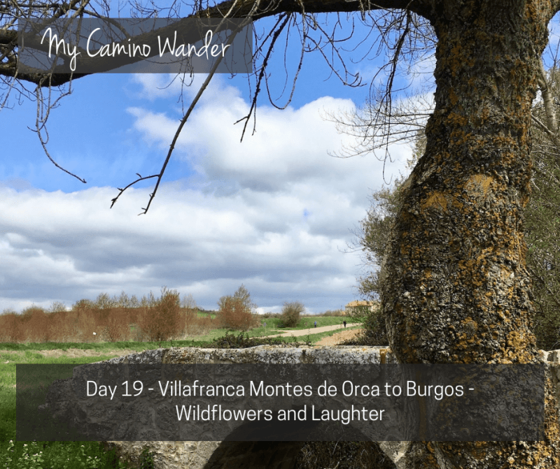 Day 19 of the Camino Wander – Wildflowers and Laughter