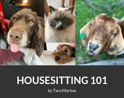 Housesitting 101 eBook